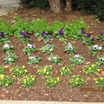 Landscape Ideas for Flowers