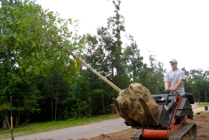 Front End Loader Carrying a Tree